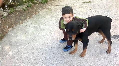 rottweilers and children rottweilers with