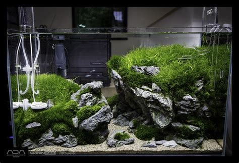 aquascape tank for sale 908 best images about aquarium fish tank aquascape