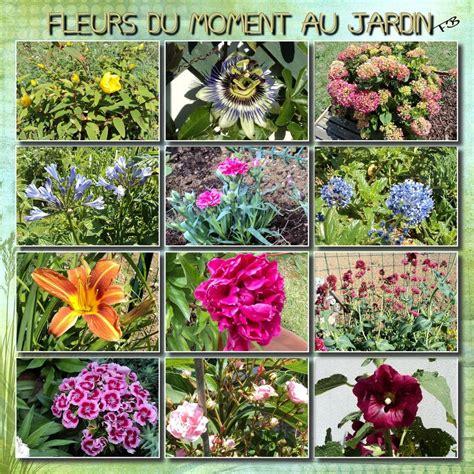fleurs de juin au jardin l univers d erika