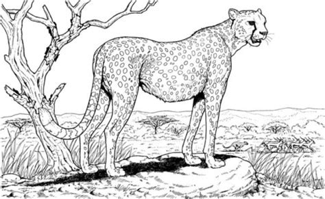 hard nature coloring pages 301 moved permanently