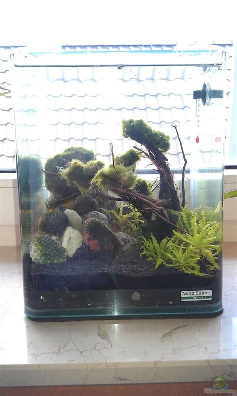 das fensterbank aquarium der einsame baum das fensterbank experiment aus