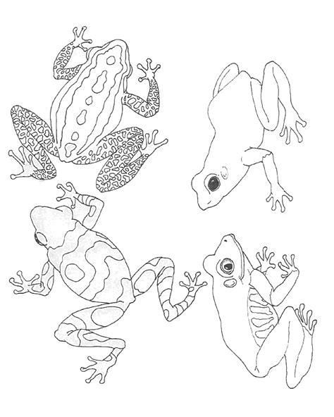 Tree Frog Coloring Pages Az Coloring Pages Tree Frog Coloring Page