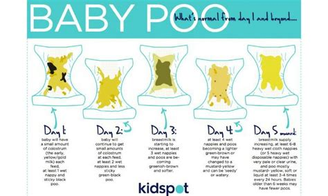 Green Stool In Infants Fed Formula by How Many Days Can A Baby Go Without Pooing Kidspot