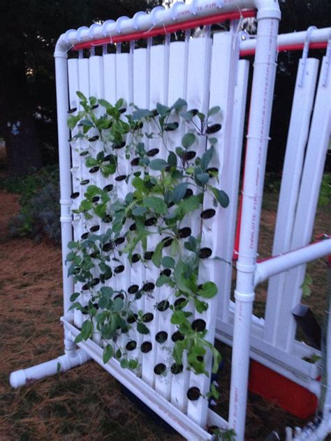 vertical hydroponic farm  steps  pictures