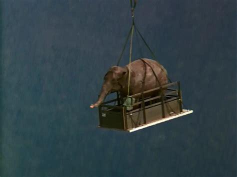 Vcd Original Operation Dumbo Drop cinema 52 worst disney 52 operation dumbo drop
