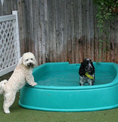 Backyard Pools For Dogs 17 Best Ideas About Doggie Pool On Daycare For