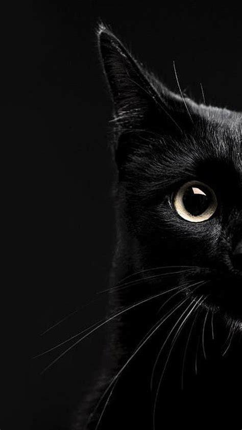 black cat wallpaper iphone photo collection black cat wallpaper download
