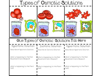 Moving Cellular Materials Worksheet Answers by 100 Worksheet On Diffusion And Osmosis With Answers