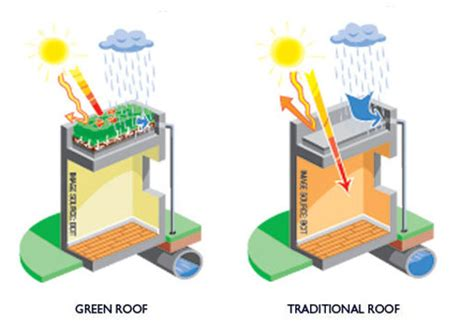living green roof advantages why green roofs benefits