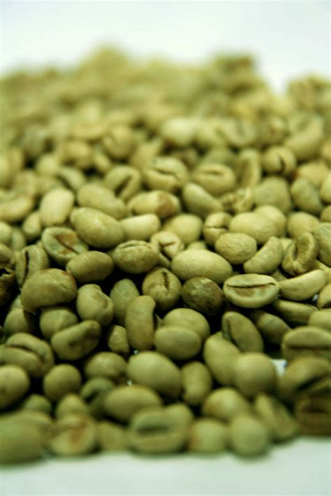 Green Coffee Bean green coffee beans buy from kharisma nusantara indonesia