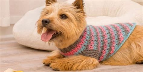 patterns for dog sweaters crochet sporty style crochet dog sweater free crochet pattern