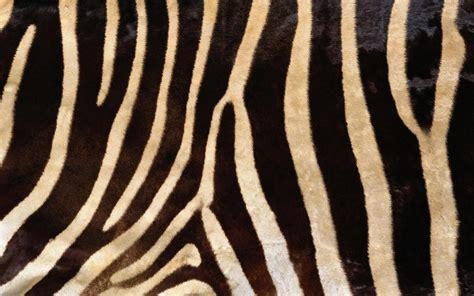 Skin Pattern Of Zebra | fmp design context bacardi animal skin