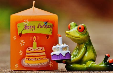 best happy birthday photos free photo happy birthday birthday frog free image on