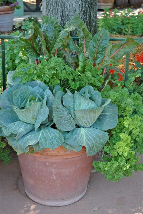 534 Best Container Vegetable Gardening Images On Pinterest Potted Vegetable Garden