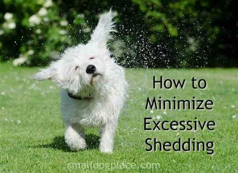 how to minimize dog hair in house excessive dog shedding three proven methods to reduce the