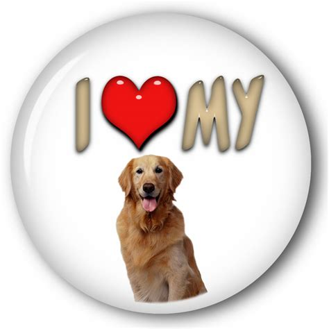 my golden retriever quot i my quot golden retriever pictured