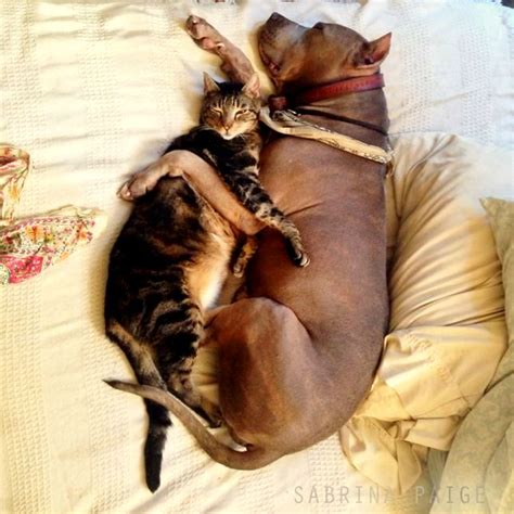 and cat cuddling 40 dogs and cats who just to cuddle