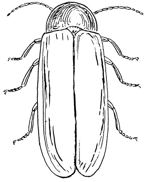 lightning bug coloring pages az coloring pages