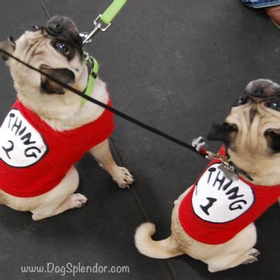 pug rescue dc best 25 pug rescue ideas on pug puppies pugs and pug rescue near me