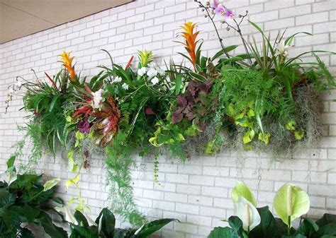plants for wall gardens best plants for vertical garden vertical garden plants