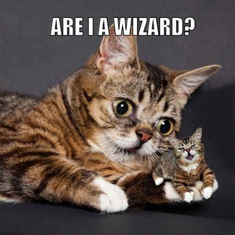 Lil Bub Meme - lil bub perma kitten grumpy cat meme see funny