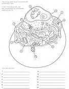 ask a biologist coloring page coloring pages worksheets on coloring pages