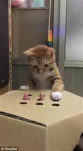 who plays cat cat plays whac a mole with owner using a cardboard