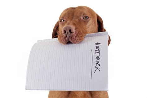 do dogs remember their puppies 10 best excuses for not doing your homework tutorhub