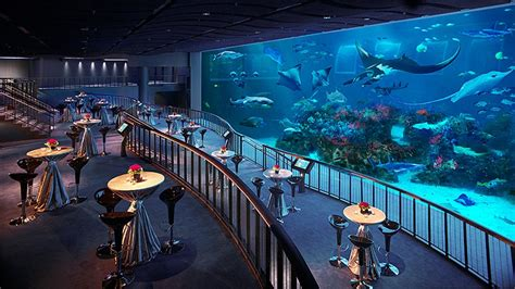seafront home in singapore with underwater media room s e a aquarium mice singapore