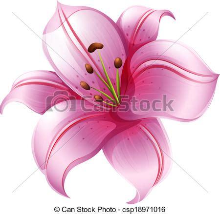 giglio rosa fiore clipart vettoriali di 224 rosa giglio fiore