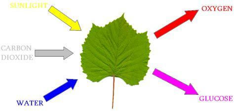Läuse Auf Pflanzen 3917 by Meer Voedsel Door Betere Fotosynthese Resource
