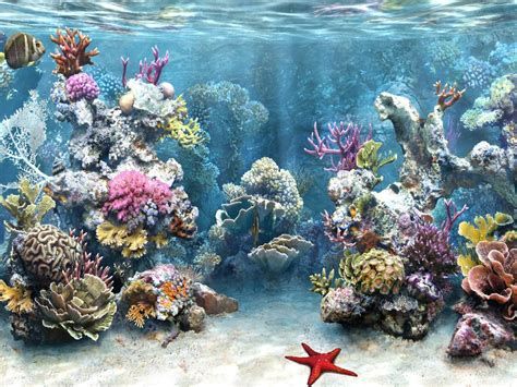 wallpaper animasi laut hewan lucu 2016 animasi bergerak pemandangan bawah laut