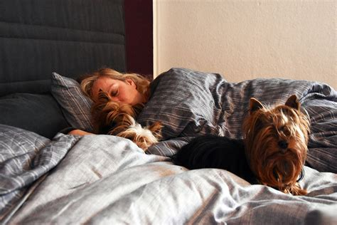 hund macht ins bett hund im bett ja oder nein terrier
