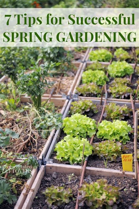 7 excellent tips for successful launch of your first home 7 tips for successful spring gardening