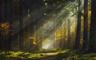 sun rays morning forest path mist nature landscape