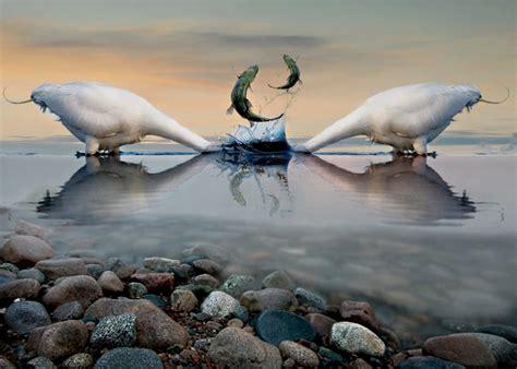 il gabbiano uccello sfondi mare umorismo natura cigno airone arte