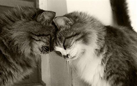 Single woman two cats hugging