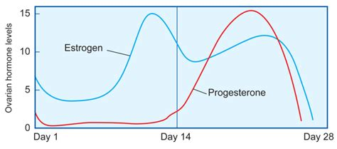 curves estrogen before after the menstrual cycle ck 12 foundation