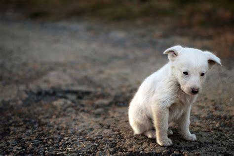 stray puppy what to do if you come across a stray pets4homes