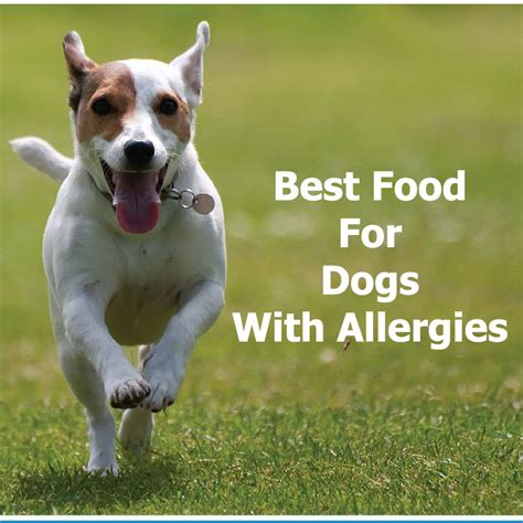 best food for dogs best food for dogs with allergies