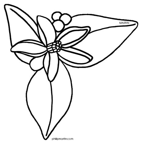 orange blossom clip art cliparts co