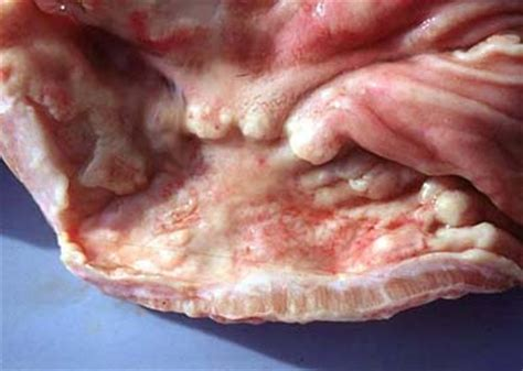 canine intestinal  stomach cancers