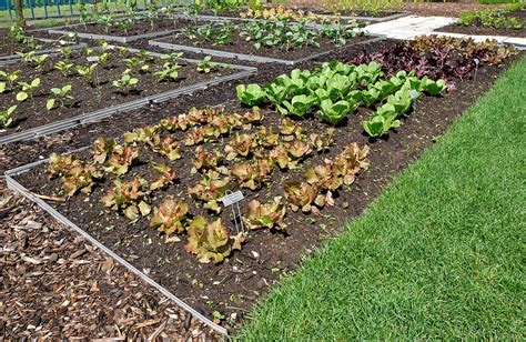 vegetable bed intensive planting in the vegetable garden harvest to table