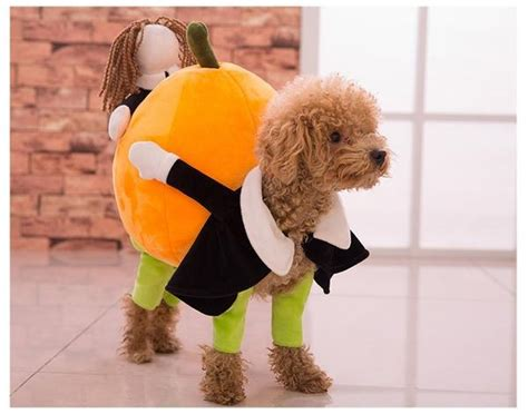 pumpkin carrying dog costume spoileddogdesignscom