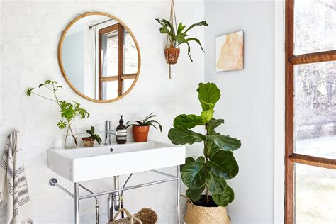 plants ideas  decorating  greenery  home curbed