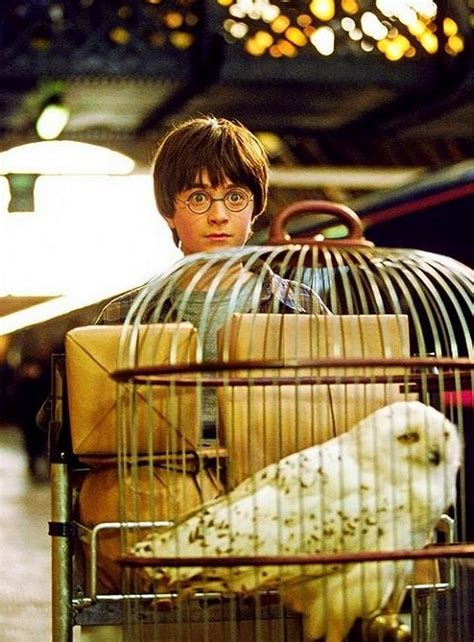 10 Unknown Facts about Harry Potter Movies - Alux.com Unknowns About Harry Potter