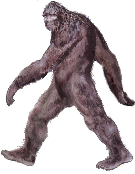 The Yacolt Sighting   Sasquatch Chronicles