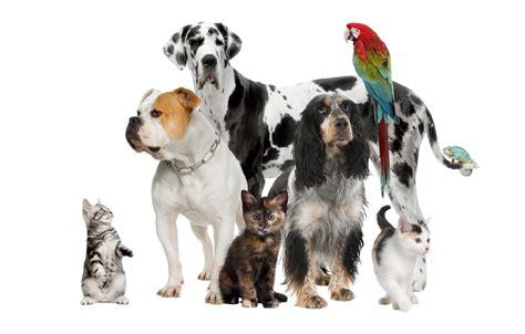 pet handley feed
