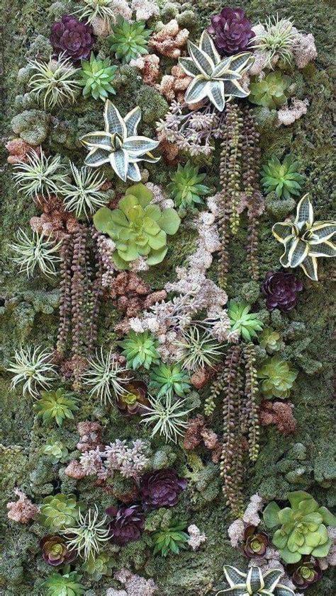 succulent wall gardens best 25 succulent wall gardens ideas on