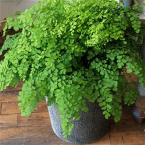 low light house plants low light plants on pinterest indoor house plants easy house plants and best indoor